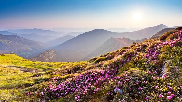 Onder het gezag van de Schepper zijn alle dingen perfect