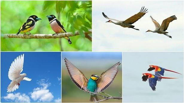 Op de vijfde dag toont het leven van gevarieerde en diverse vormen het gezag van de Schepper op verschillende manieren